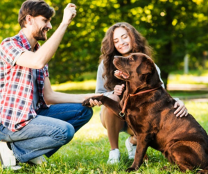 Your Ultimate Guide to the Top 5 Dog Parks in Seattle, WA