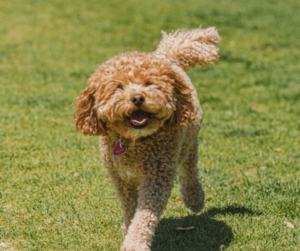 3 Best Dog Parks in Indianapolis You Must Visit With Your Pup
